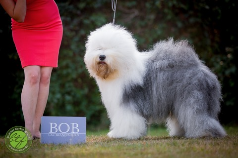 bob_bobtail (4)